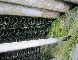 Cách diệt sạch rong rêu trong hệ thống tháp giải nhiệt nước