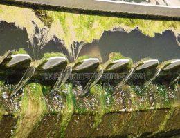 Lý do rong rêu vẫn phát triển trong tháp giải nhiệt dù đã xử lý hóa chất
